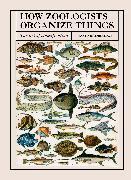 Cover-Bild zu Bainbridge, David: How Zoologists Organize Things