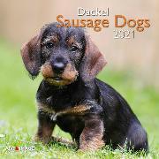 Cover-Bild zu Sausage Dogs 2021 A&I INT