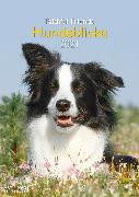 Cover-Bild zu Hundeblicke 2021 - Wand-Kalender - Tier-Kalender - A&I - 29,7x42