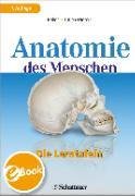 Cover-Bild zu Anatomie des Menschen