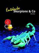 Cover-Bild zu Kunz, Kriton: Entdecke Skorpione & Co