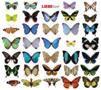 Cover-Bild zu LIEBE 5