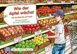 Cover-Bild zu Wie der Apfel wächst. Von der Blüte bis zur Frucht. Kamishibai Bildkartenset von Hauenschild, Lydia