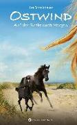 Cover-Bild zu Henn, Kristina Magdalena: Auf der Suche nach Morgen