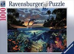 Cover-Bild zu Korallenbucht