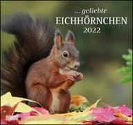 Cover-Bild zu Christine, Meier (Fotogr.): geliebte Eichhörnchen 2022 - DUMONT Wandkalender - mit den wichtigsten Feiertagen - Format 38,0 x 35,5 cm