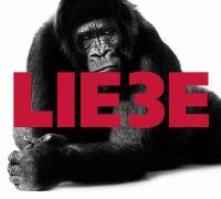 Cover-Bild zu Liebe Drei