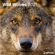 Cover-Bild zu teNeues Calendars & Stationery GmbH & Co. KG: Wild Wolves 2021 - Wand-Kalender - Broschüren-Kalender - 30x30 - 30x60 geöffnet - Wolf-Kalender