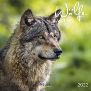 Cover-Bild zu Wölfe 2022