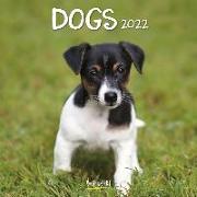 Cover-Bild zu Dogs 2022