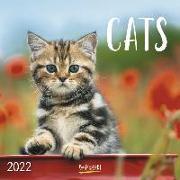Cover-Bild zu Cats 2022