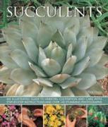 Cover-Bild zu Hewitt Terry: Succulents