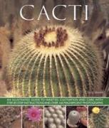 Cover-Bild zu Hewitt, Terry: Cacti