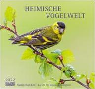 Cover-Bild zu DUMONT Kalender (Hrsg.): Heimische Vogelwelt 2022 - DUMONT Wandkalender - mit den wichtigsten Feiertagen - Format 38,0 x 35,5 cm