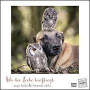 Cover-Bild zu Brandt, Tanja (Fotograf): Wo die Liebe hinfliegt 2022 - Ingo, Poldi und Freunde - Wandkalender mit Spiralbindung - DUMONT Quadratformat 24 x 24 cm