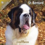 Cover-Bild zu St. Bernard 2011