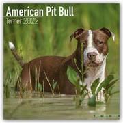 Cover-Bild zu American Pit Bull Terriers 2022 - 18-Monatskalender mit freier DogDays-App