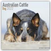 Cover-Bild zu Australian Cattle Dogs - Australische Cattle Dogs 2022 - 18-Monatskalender mit freier DogDays-App