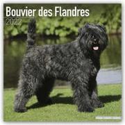 Cover-Bild zu Bouvier des Flandres - Flandrischer Treibhund 2022 - 18-Monatskalender mit freier DogDays-App