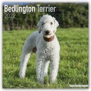 Cover-Bild zu Bedlington Terrier 2022 - 18-Monatskalender mit freier DogDays-App