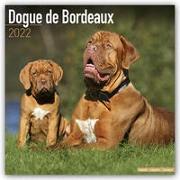 Cover-Bild zu Dogue de Bordeaux - Bordeauxdoggen 2022 - 18-Monatskalender mit freier DogDays-App