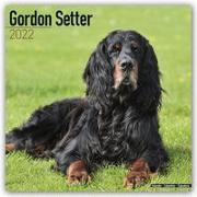 Cover-Bild zu Gordon Setter 2022 - 16-Monatskalender