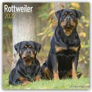 Cover-Bild zu Rottweilers - Rottweiler 2022 - 18-Monatskalender mit freier DogDays-App