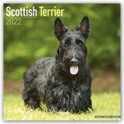 Cover-Bild zu Scottish Terriers - Scottish Terrier 2022 - 18-Monatskalender mit freier DogDays-App