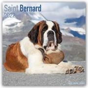 Cover-Bild zu Saint Bernards - Bernhardiner 2022 - 18-Monatskalender mit freier DogDays-App