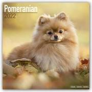 Cover-Bild zu Pomeranians - Zwergspitze 2022 - 18-Monatskalender mit freier DogDays-App