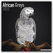 Cover-Bild zu African Greys - Graupapageien 2022