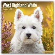 Cover-Bild zu West Highland White Terriers - Westies 2022 - 18-Monatskalender mit freier DogDays-App