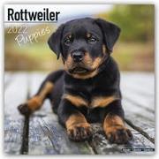 Cover-Bild zu Rottweiler Puppies - Rottweiler Welpen 2022