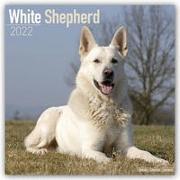 Cover-Bild zu White German Shepherds - Weiße Schäferhunde 2022 - 18-Monatskalender mit freier DogDays-App