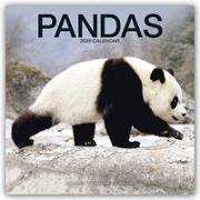 Cover-Bild zu Pandas - Pandabären 2022 - 18-Monatskalender