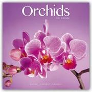 Cover-Bild zu Orchids - Orchideen 2022