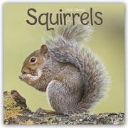 Cover-Bild zu Squirrels - Eichhörnchen - Grauhörnchen 2022 - 18-Monatskalender