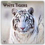 Cover-Bild zu White Tigers - Weiße Tiger 2022 - 18-Monatskalender