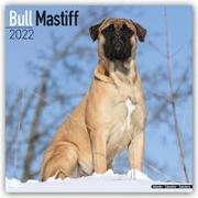 Cover-Bild zu Bullmastiffs 2022 - 18-Monatskalender mit freier DogDays-App
