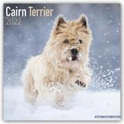 Cover-Bild zu Cairn Terrier - Cairn Terrier 2022 - 16-Monatskalender