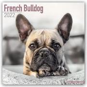 Cover-Bild zu French Bulldogs - Französische Bulldoggen 2022 - 18-Monatskalender mit freier DogDays-App