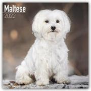 Cover-Bild zu Maltese - Malteser 2022 - 18-Monatskalender mit freier DogDays-App
