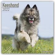 Cover-Bild zu Keeshonden - Wolfsspitze 2022 - 18-Monatskalender mit freier DogDays-App