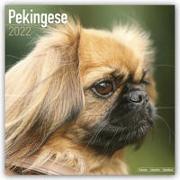 Cover-Bild zu Pekingese - Pekinesen 2022 - 18-Monatskalender mit freier DogDays-App