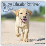 Cover-Bild zu Yellow Labrador Retriever Puppies - Weiße Labradorwelpen 2022