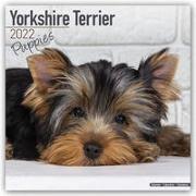Cover-Bild zu Yorkshire Terrier Puppies - Yorkshire Terrier Welpen 2022 - 18-Monatskalender mit freier DogDays-App