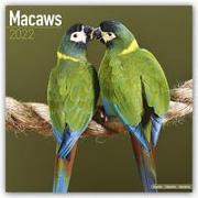 Cover-Bild zu Macaws - Ara-Papageien - Aras 2022