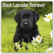 Cover-Bild zu Black Labrador Puppies - Schwarze Labradorwelpen 2022 - 18-Monatskalender