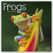 Cover-Bild zu Frogs - Frösche 2022 - 18-Monatskalender