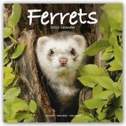 Cover-Bild zu Ferrets - Frettchen 2022 - 18-Monatskalender